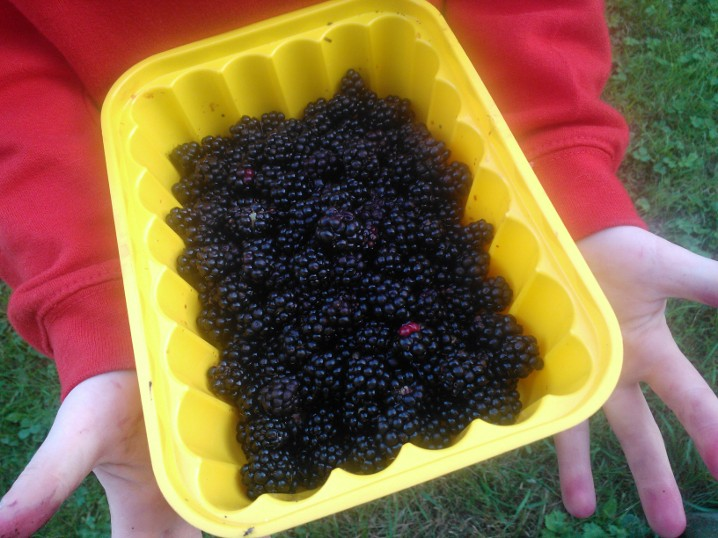 Child hands holding out bowl of blackberries